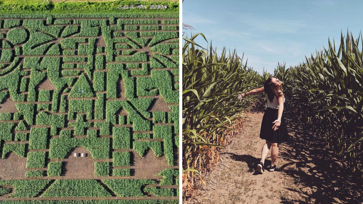 7 Giant Corn Mazes Near Montreal Where You Can Lose Yourself In The Magic Of Fall