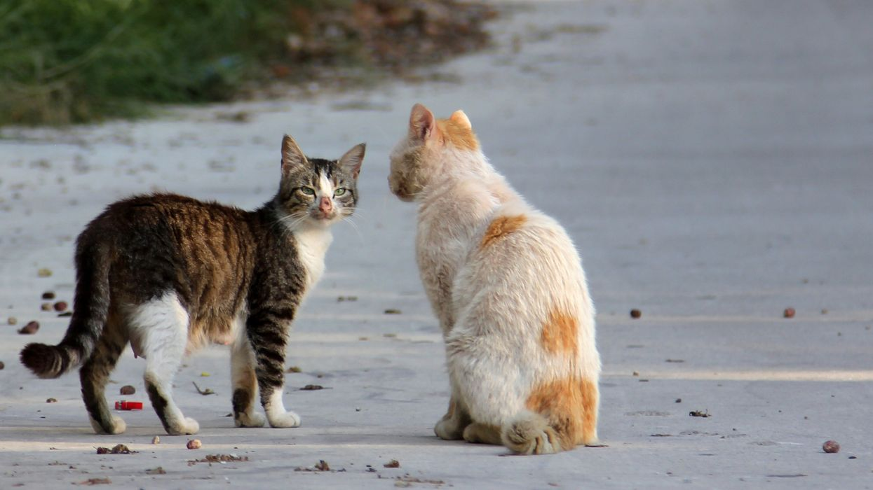 Various 'Decapitated Cats' Have Reportedly Been Found In Montreal's West Island Recently