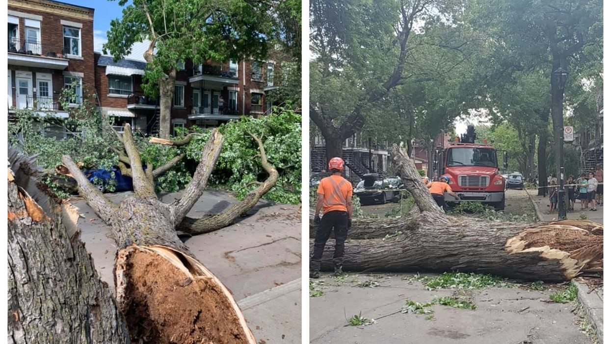 Strong Winds In Montreal Knocked Down A Huge Tree & It Fell On A Car (PHOTOS)