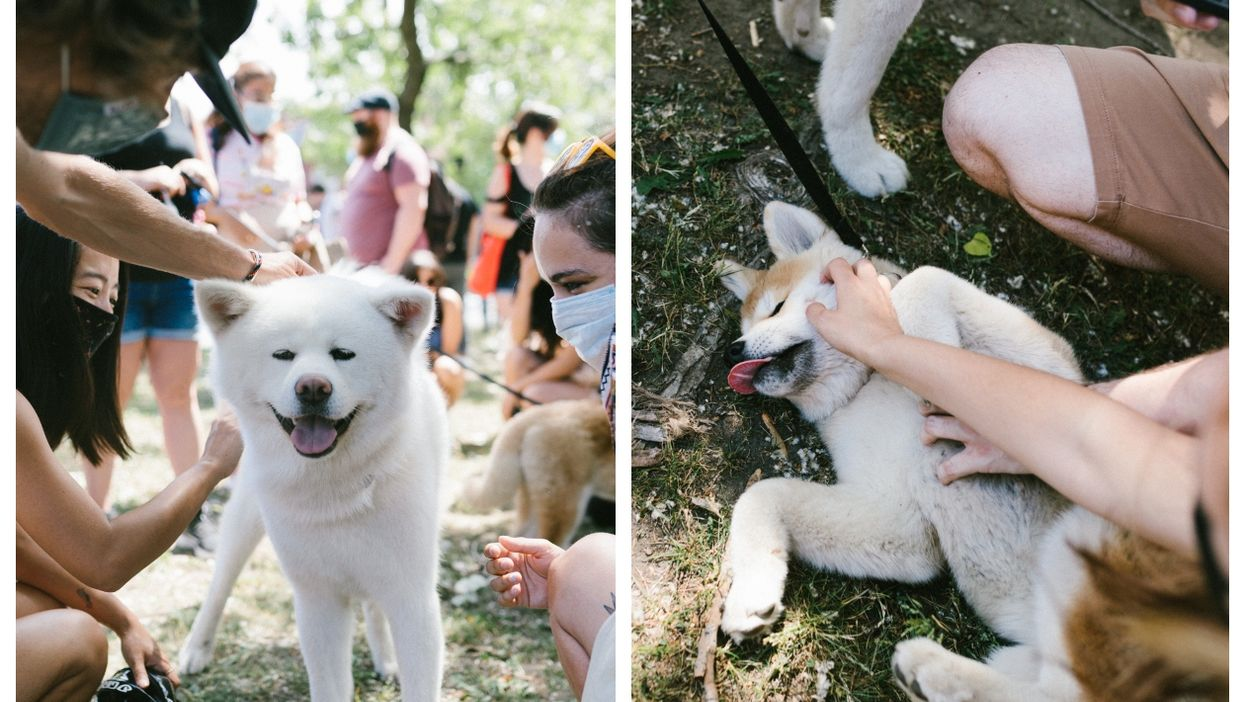 Montreal Hosted A Huge Shiba Inu Party & This Is Probably What Heaven Looks Like (PHOTOS)