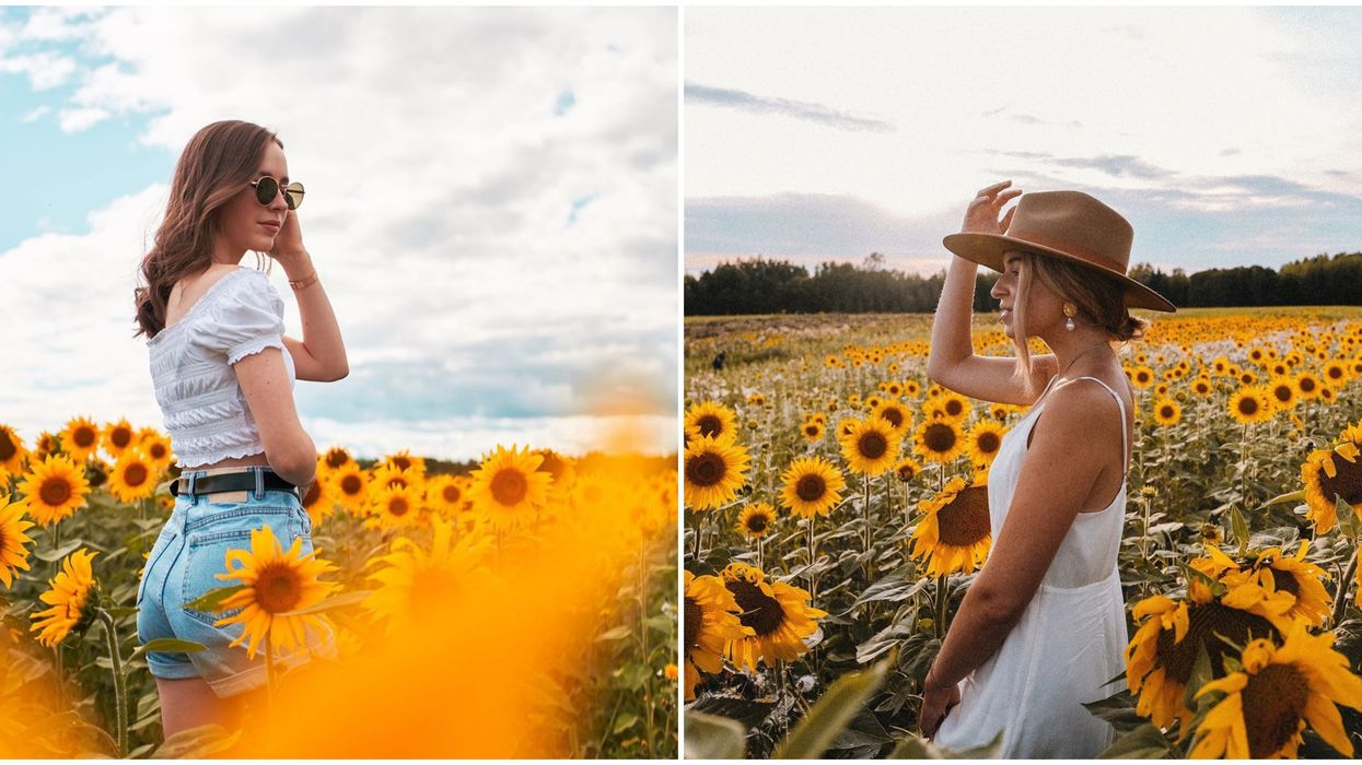 The Passion Lavande Sunflower Fields Open In August For You To Explore