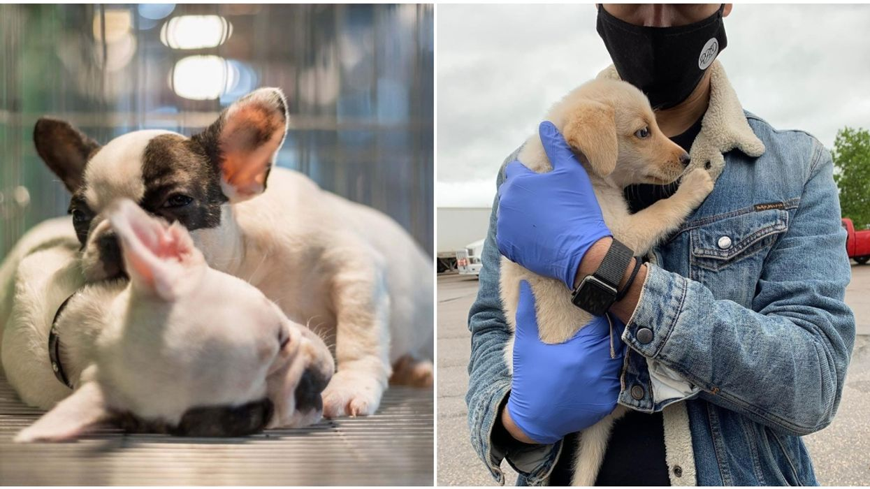 This Montrealer Has Been Rescuing Dogs All Over North America & Bringing Them To Quebec