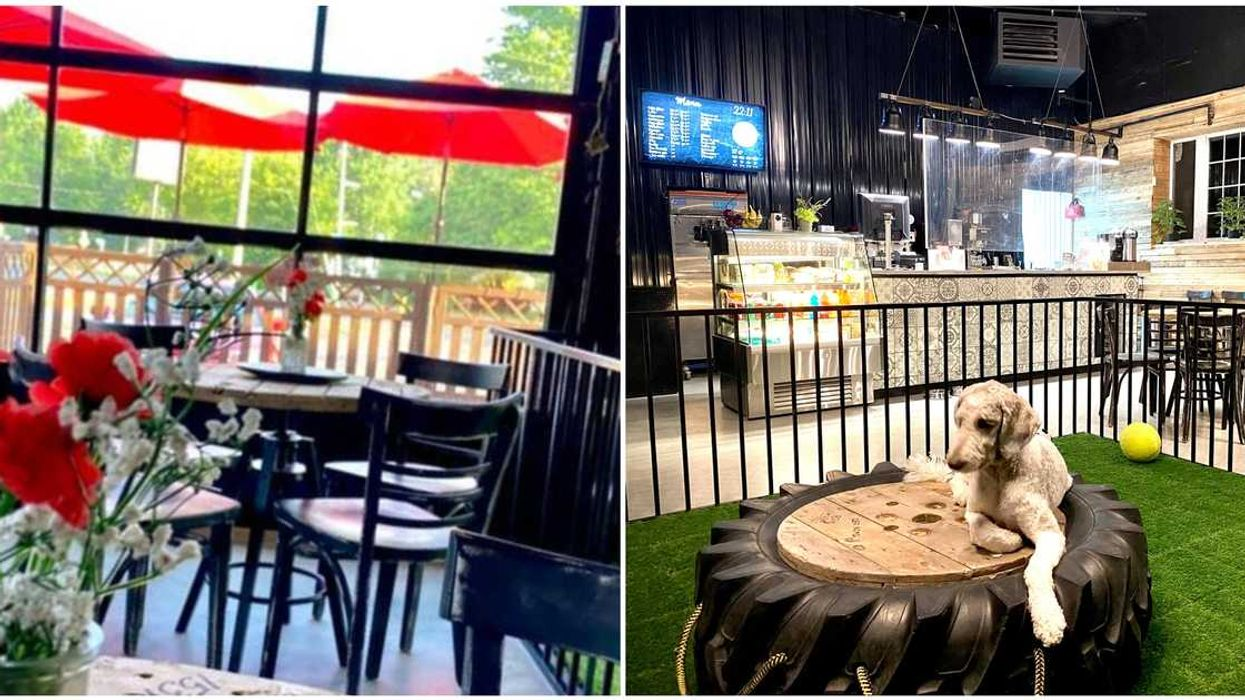 An All-New Doggy Café Just Opened In Laval