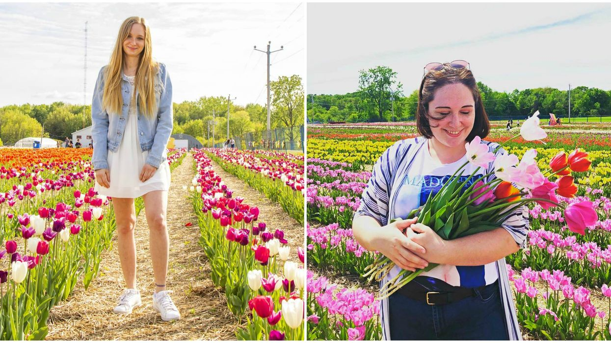 U-Pick Laval Lets You Pick Your Own Tulips During Its Spring Festival