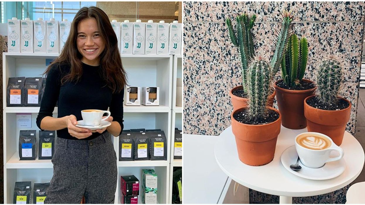You Can Get A Free Cactus With The Purchase Of A Latte This Weekend In Montreal