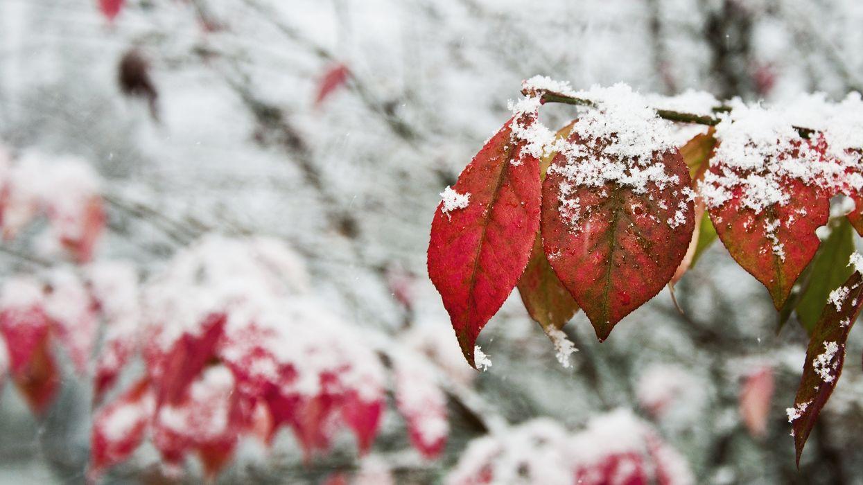 Snow In Quebec October 2019