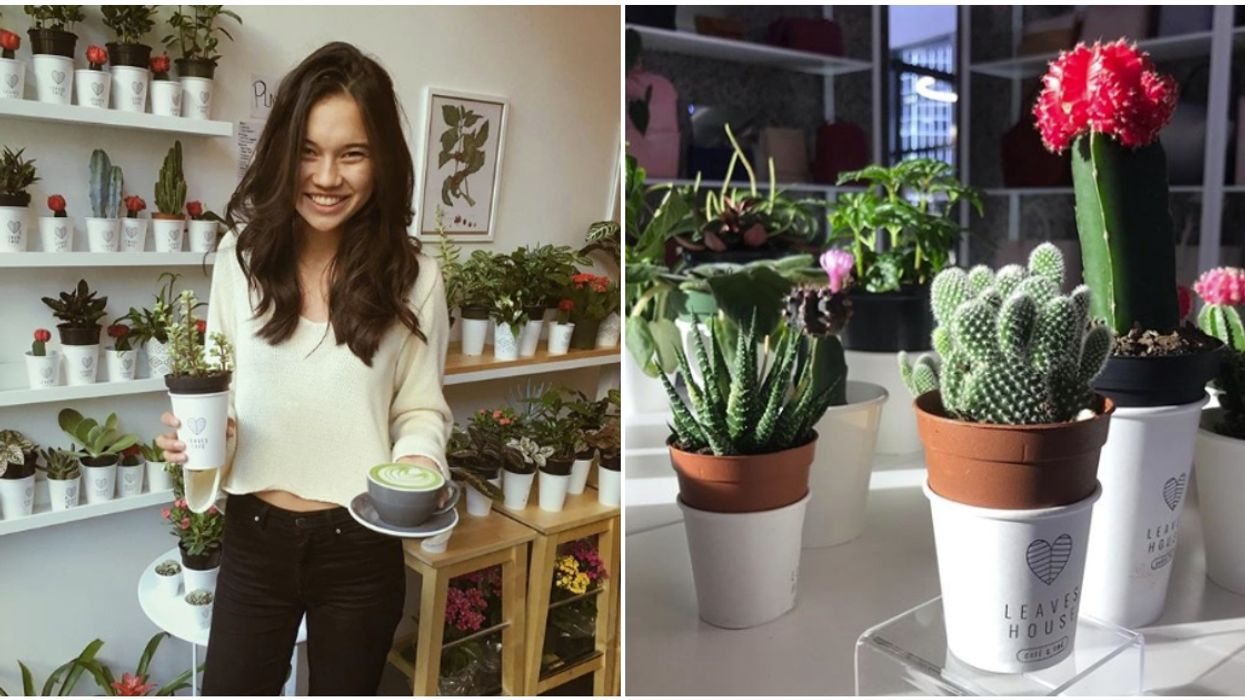 You Can Get A Free Plant When You Buy Two At Leaves House Café In Montreal This Weekend