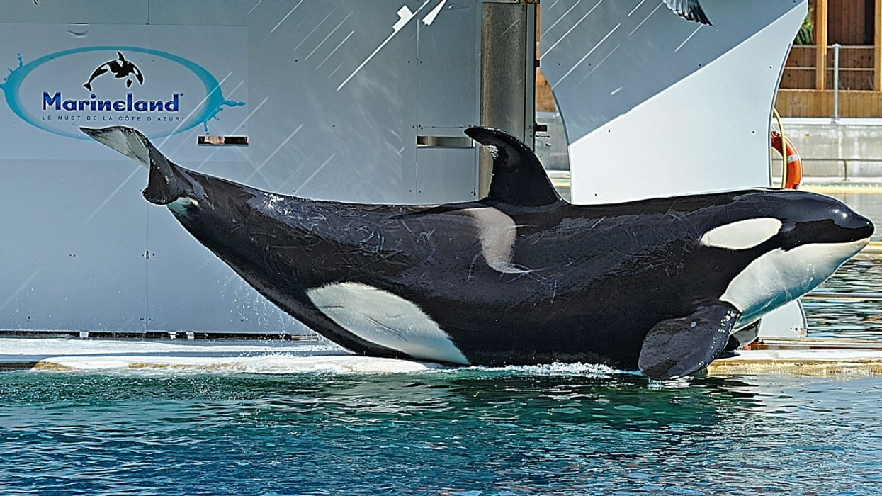 Marineland Claims They Are Exempt From Canada's New Ban On Whale And Dolphin Captivity