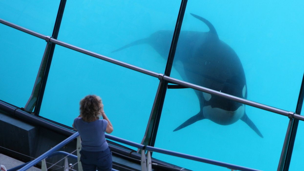 Everything You Need To Know About The New Ban On Whale And Dolphin Captivity In Canada
