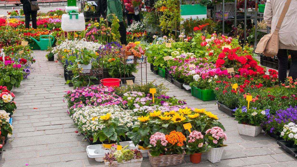 You Can Get FREE Flowers & Herbs Across Montreal This Weekend