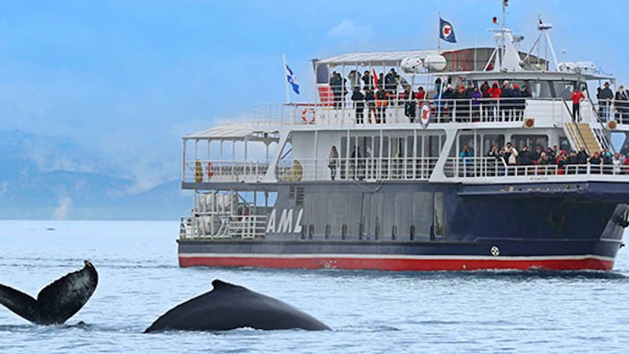 You Can Now Embark On A Round-Trip Whale Watching Cruise Package From Montreal