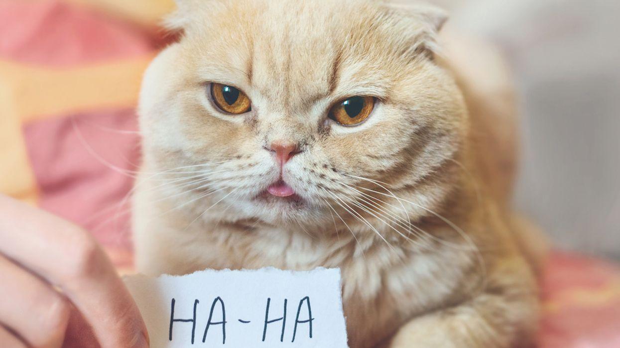 The Best April Fool's Day Jokes & Pranks Of 2019