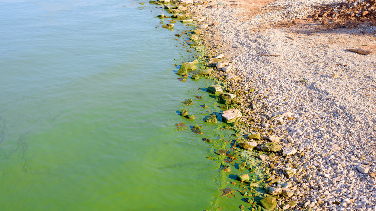 Dangerous Airborne Bacteria From Lake Algae Could Harm People And Pets In Canada This Year