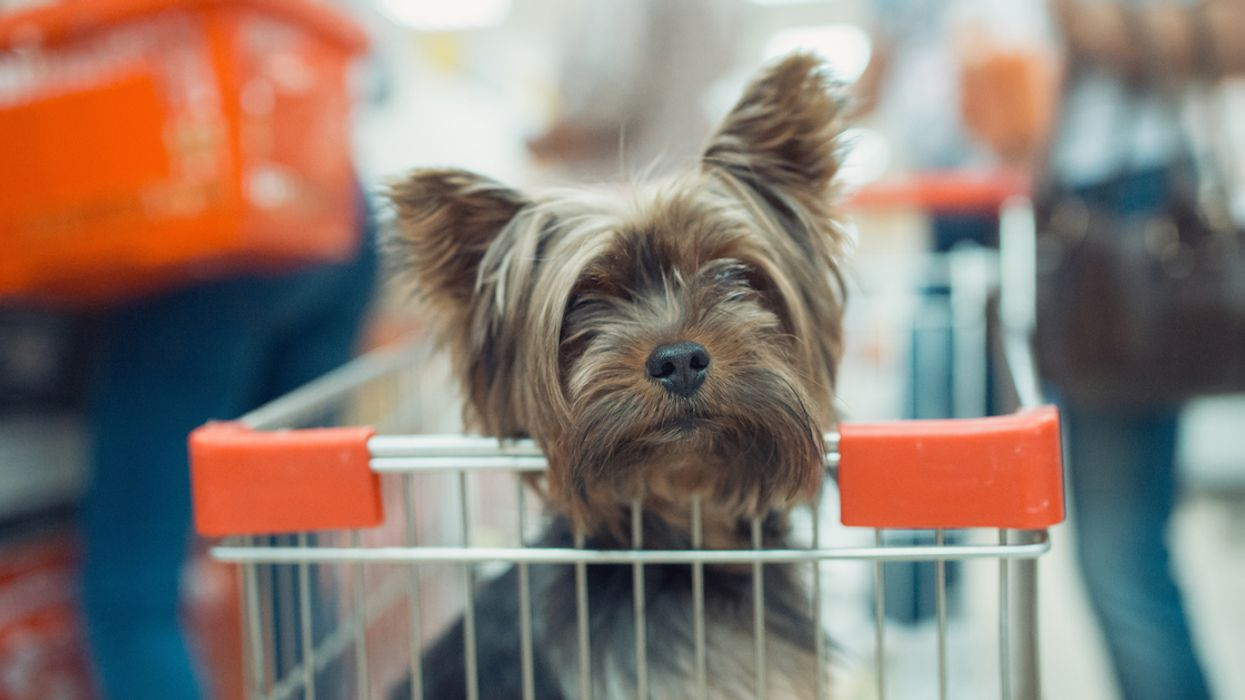 You Can Now Go Shopping With Your Dog At This Montreal Mall