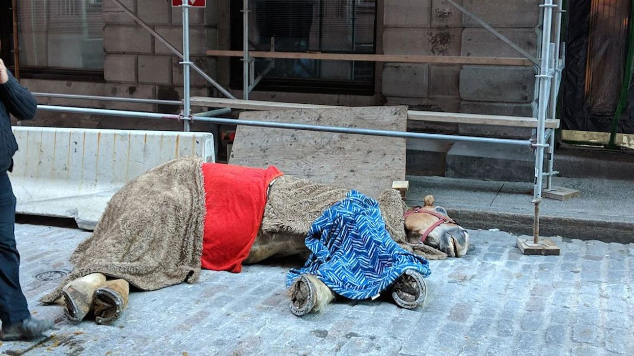 The SPCA Has Officially Announced It Is Powerless When It Comes To The Dead Calèche Horse In Old Montreal