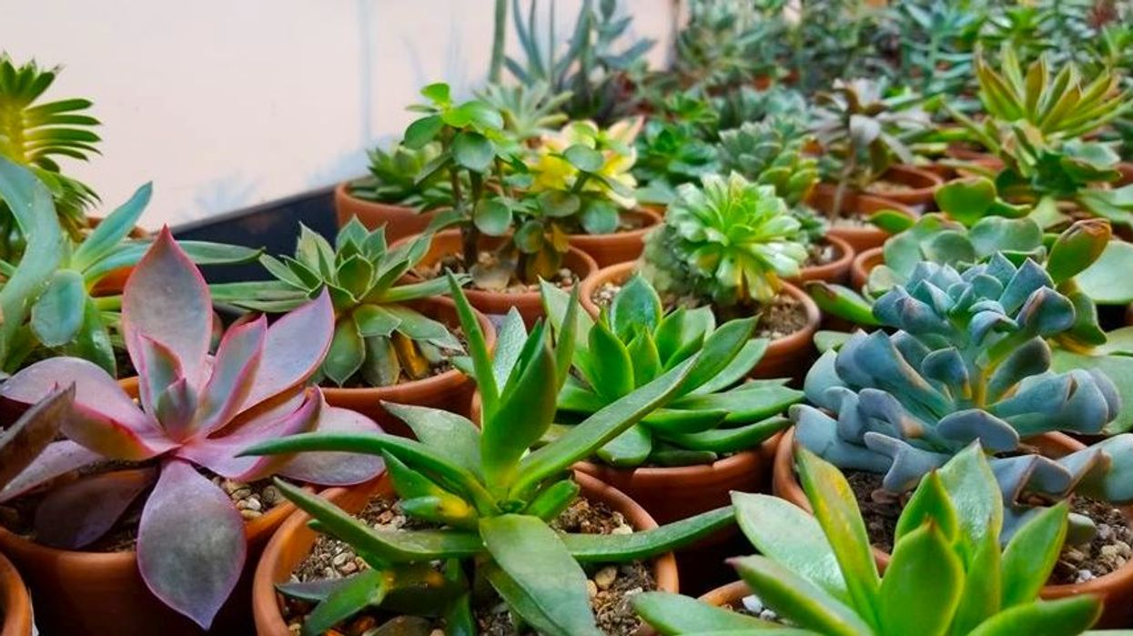 """Montreal Is Hosting A """"Mini Cactus & Succulent"""" Sale This Week"""
