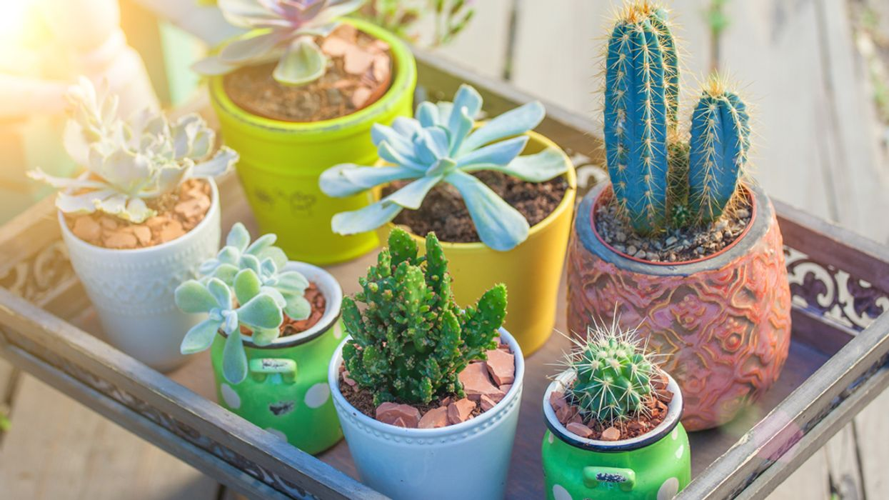 Montreal Is Getting A Mini-Cactus & Succulent Sale This Month