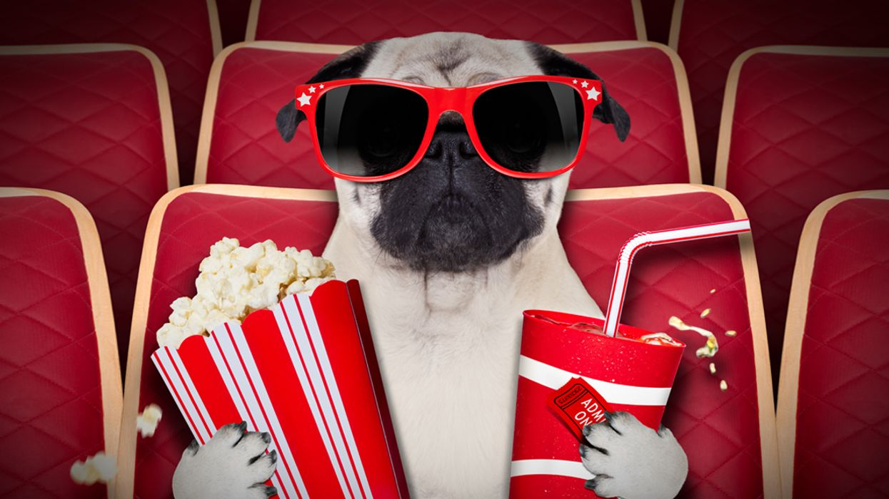 This Montreal Theater Is Letting You Bring Your Dog To The Movies