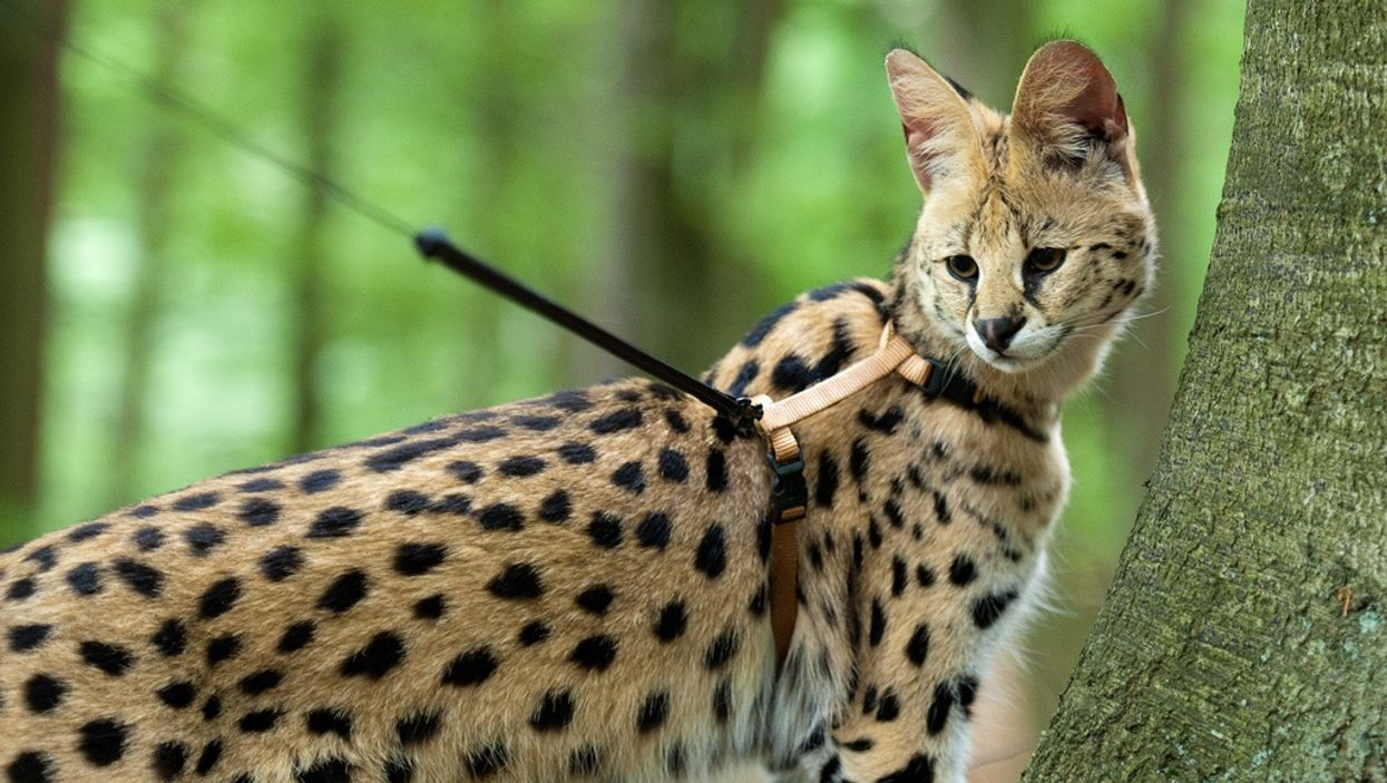 """10 Super Weird """"Exotic Animals"""" That Are Actually Legal To Own In Canada"""