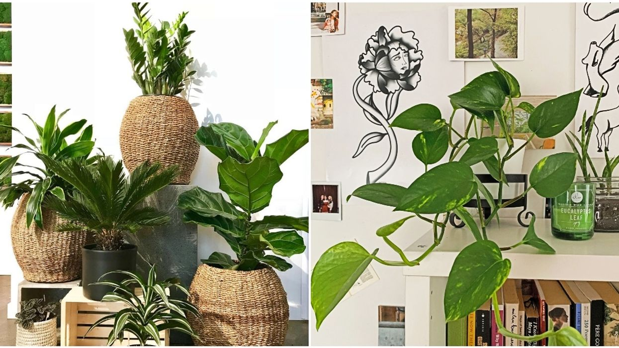 6 Local Quebec Plant Stores That Will Deliver New Life To Your Apartment