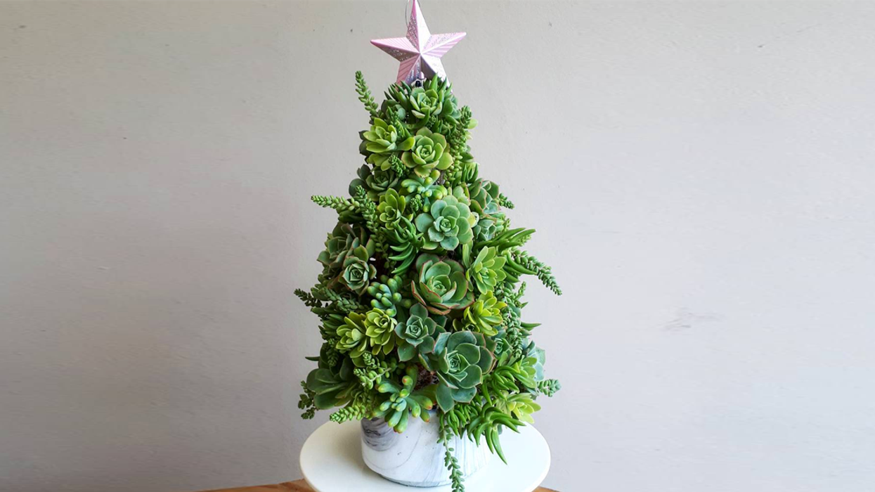 Succulent Christmas Trees Are The New Holiday Trend (Photos)