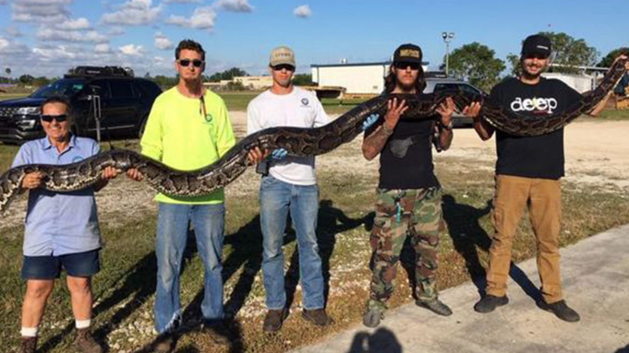 Python Hunter Kills Monster Snake, Sets New Record