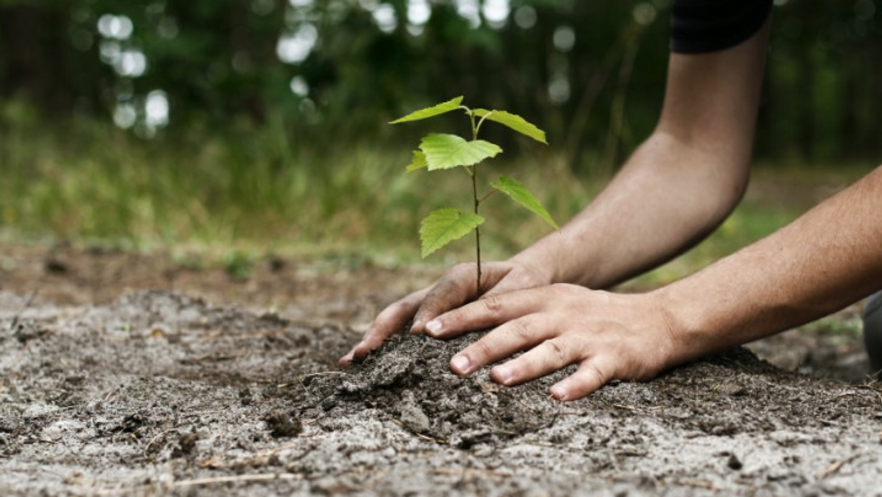 This Company In Canada Will Plant A Tree For Free On Your Behalf