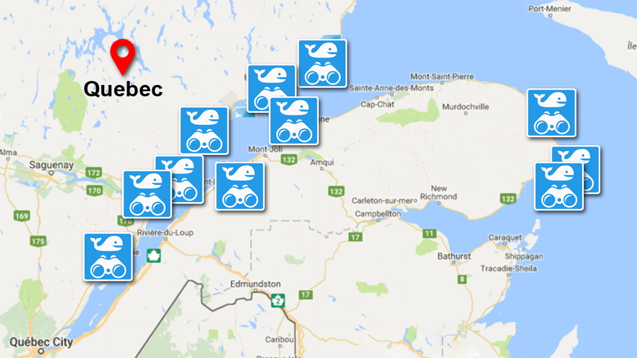 A Map Of Quebec's Best Free Whale Watching Spots