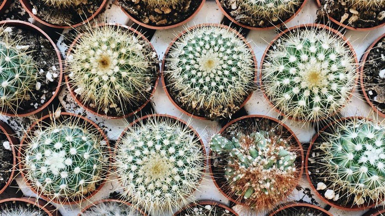 "Montreal Is Hosting A Huge ""Mini Cactus & Succulent"" Sale"