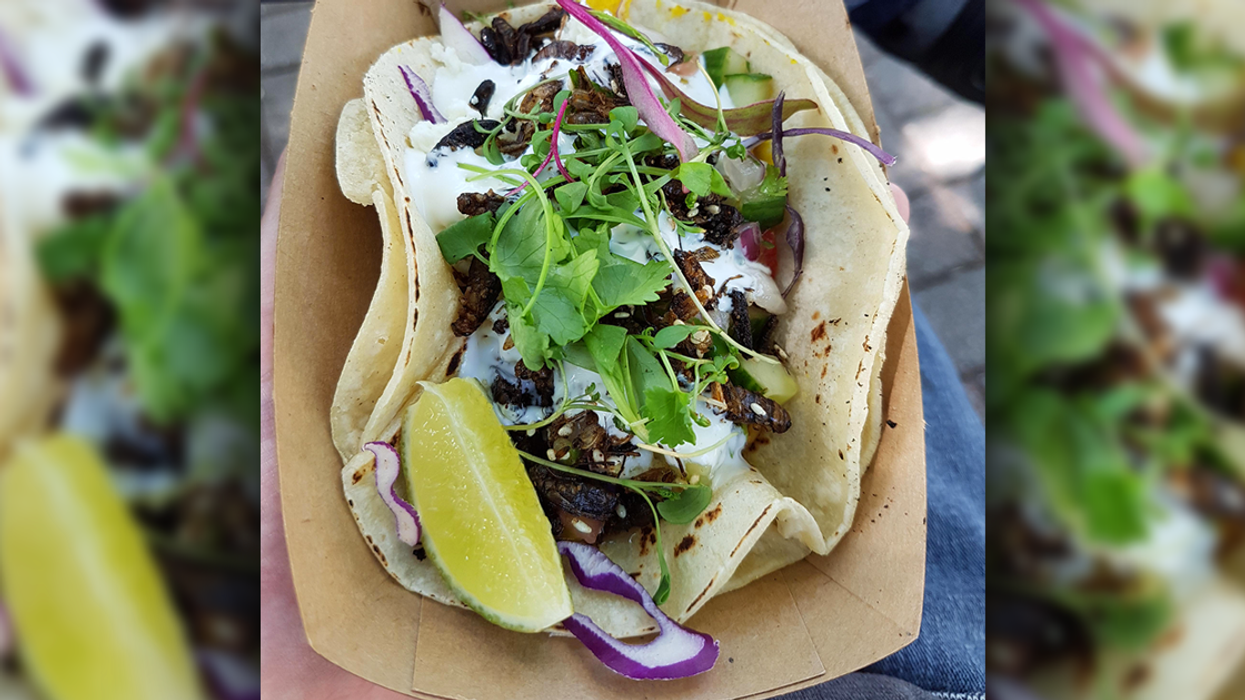 """You Can Now Eat """"Cricket Tacos"""" In Montreal"""