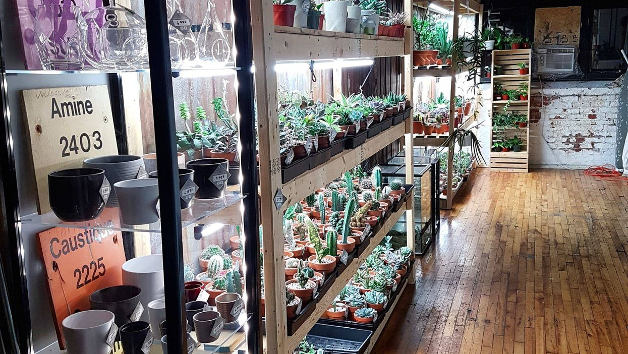 """Montreal Opening All-New """"Mini-Cactus & Succulent"""" Store"""
