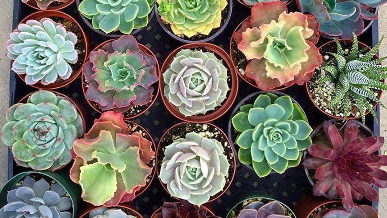 """Montreal Is Having A Huge """"Mini Cactus & Succulent Sale"""" This Weekend"""