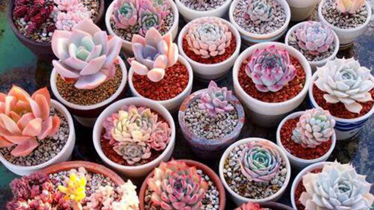 "Montreal To Host Huge ""Mini Cactus & Succulent"" Sale"