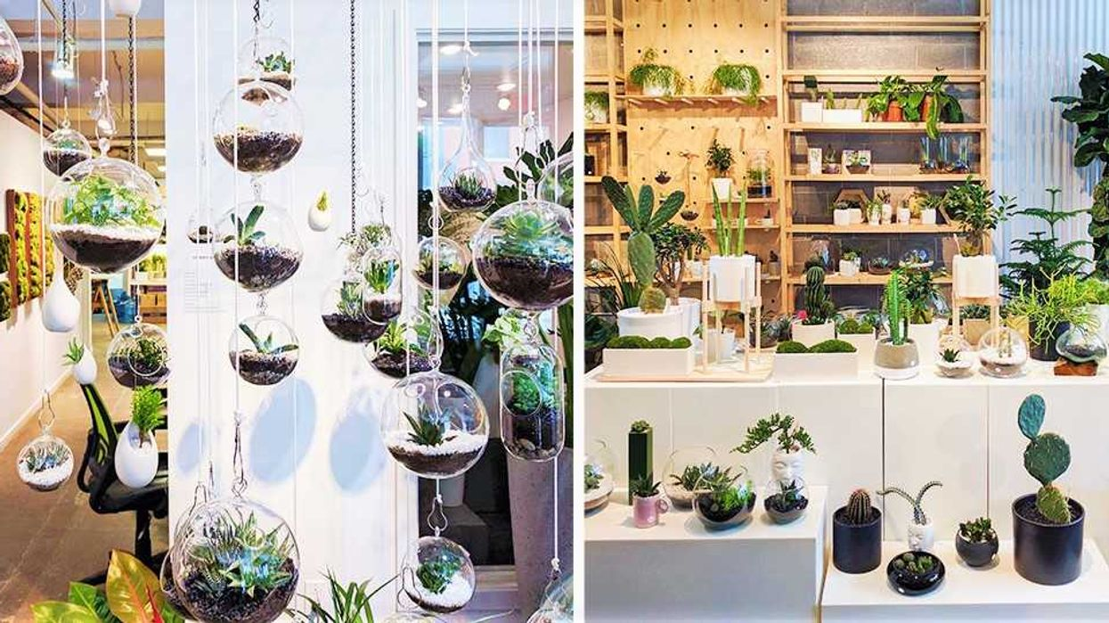 Top 10 Places To Buy Cacti And Succulents In Montreal
