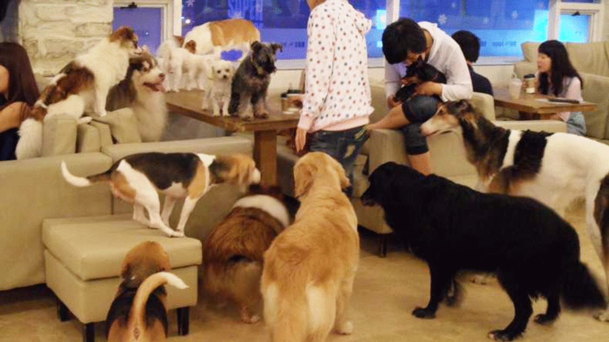 """Montreal Is Getting An All-New """"Doggy Café"""""""