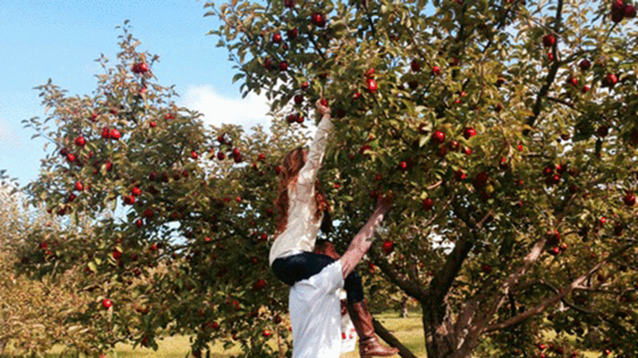 12 Beautiful Orchards Just Across The Border From Montreal You Have To Go Apple Picking At