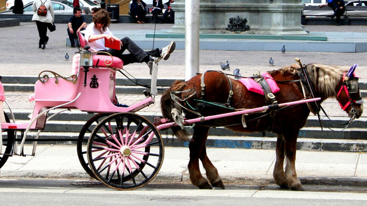 The Sad Reality Of Calèche Horses In Montreal