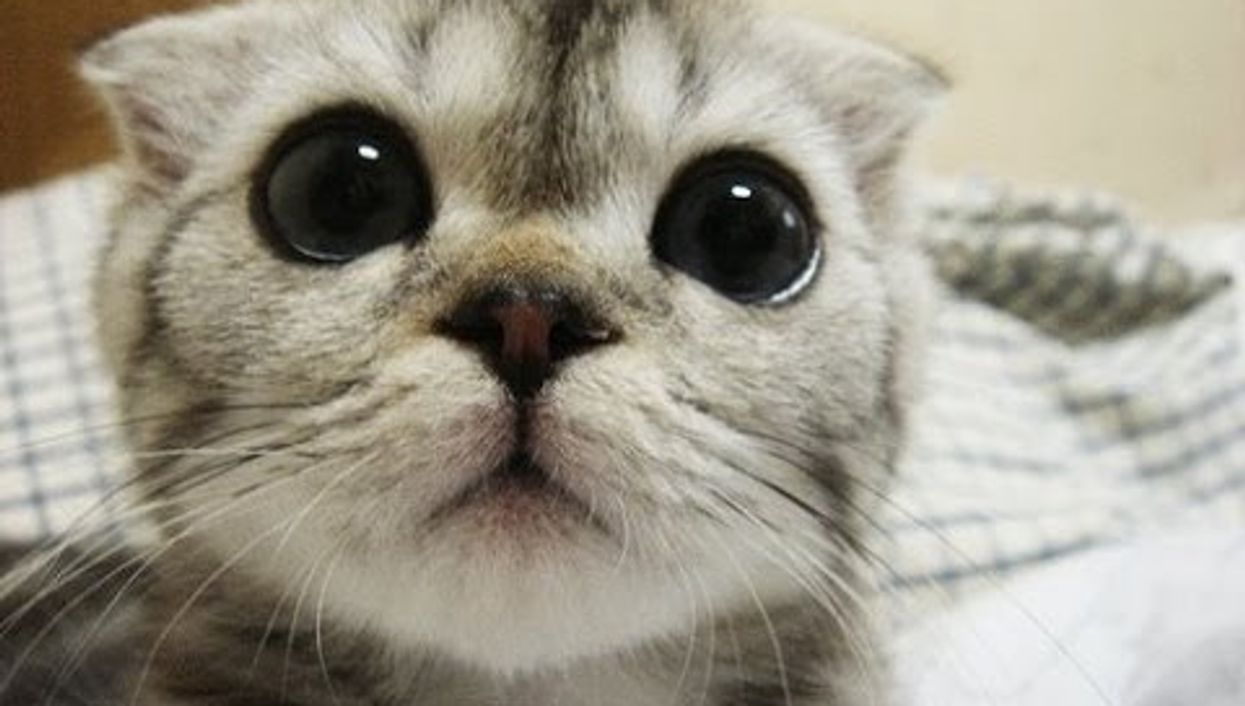 Watching Funny Cat Videos At Work Actually Boosts Your Productivity