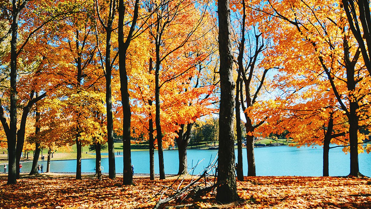 Best Photos Of Montreal's Beaver Lake During The Fall