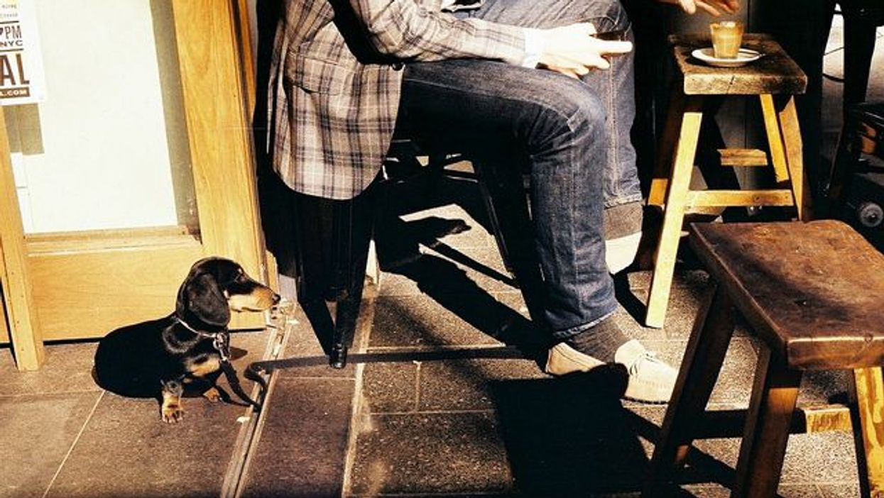 5 Montreal Bars & Cafés Where You Can Actually Take Your Dogs To
