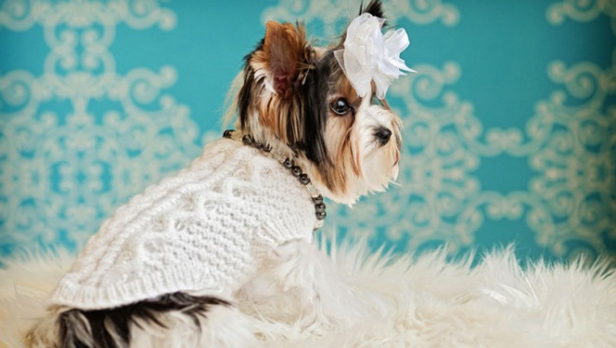 Montreal Designers Make Top Dog Couture Outfits For The Oscars