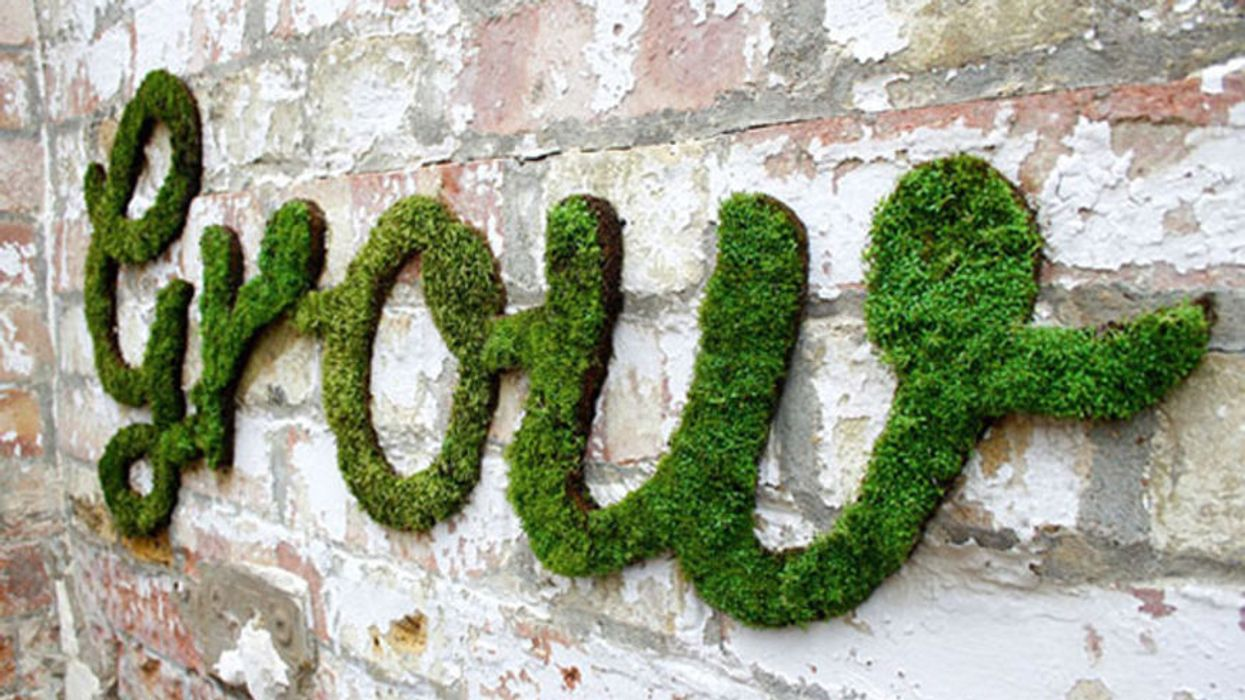 """How You Can """"Grow"""" Graffiti On Your Wall"""