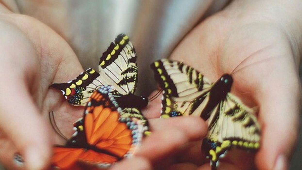 """Montreal's """"Butterfly Festival"""" At Jardin Botanique Begins Tomorrow"""