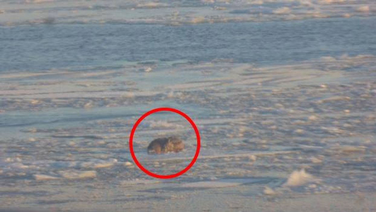 Spotted: Dog Floating On A Hunk Of Ice On The St. Lawrence River