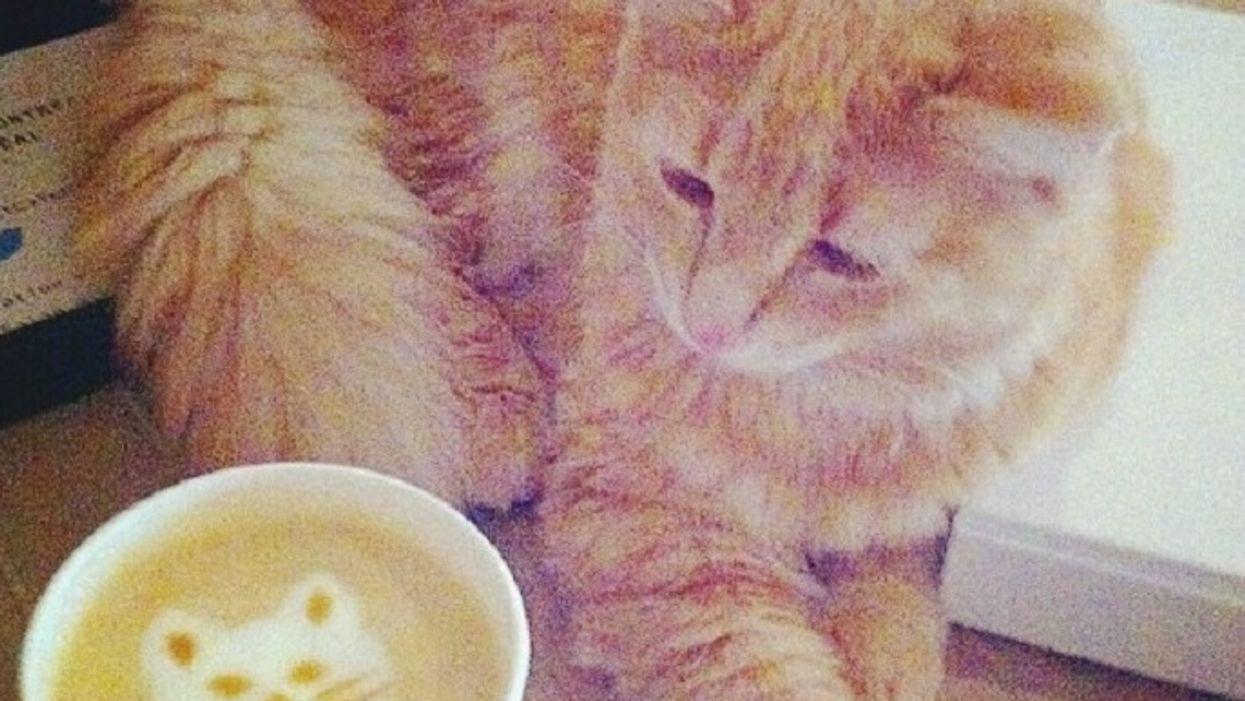 7 Really Weird Things You Need To Know About Montreal's Cat Cafés