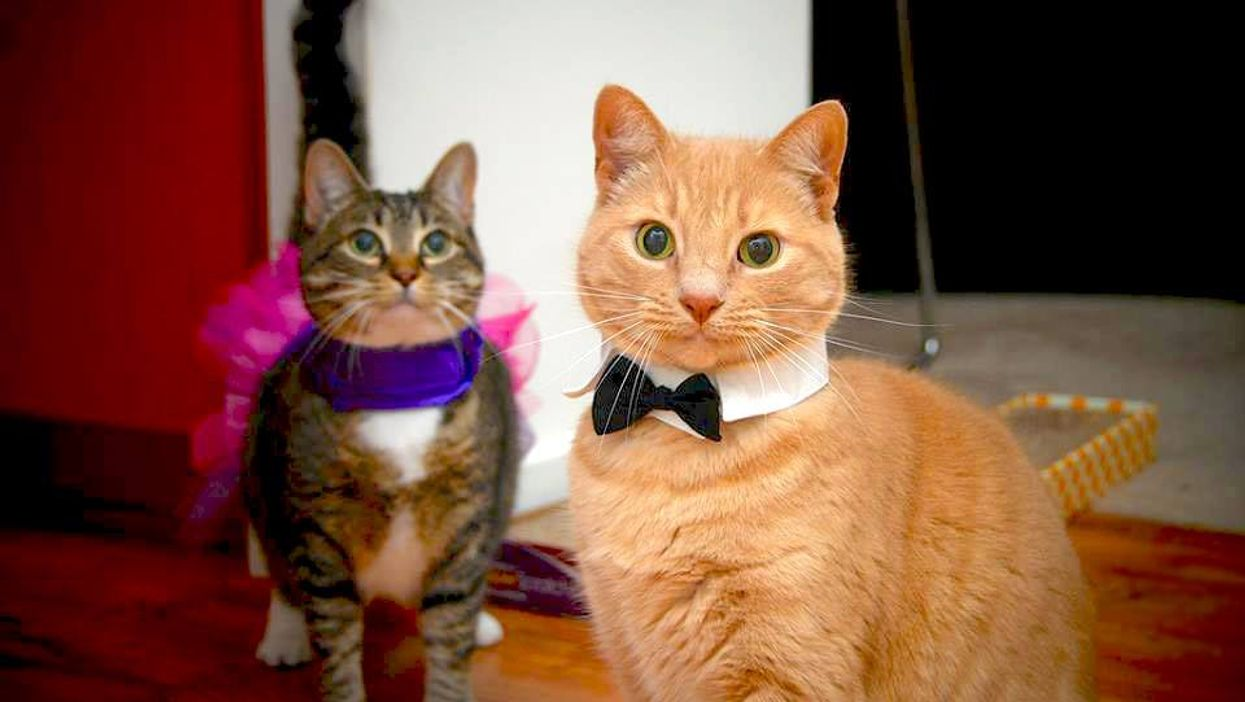 """Montreal National """"Dress Up Your Pet Day"""" Is Today"""