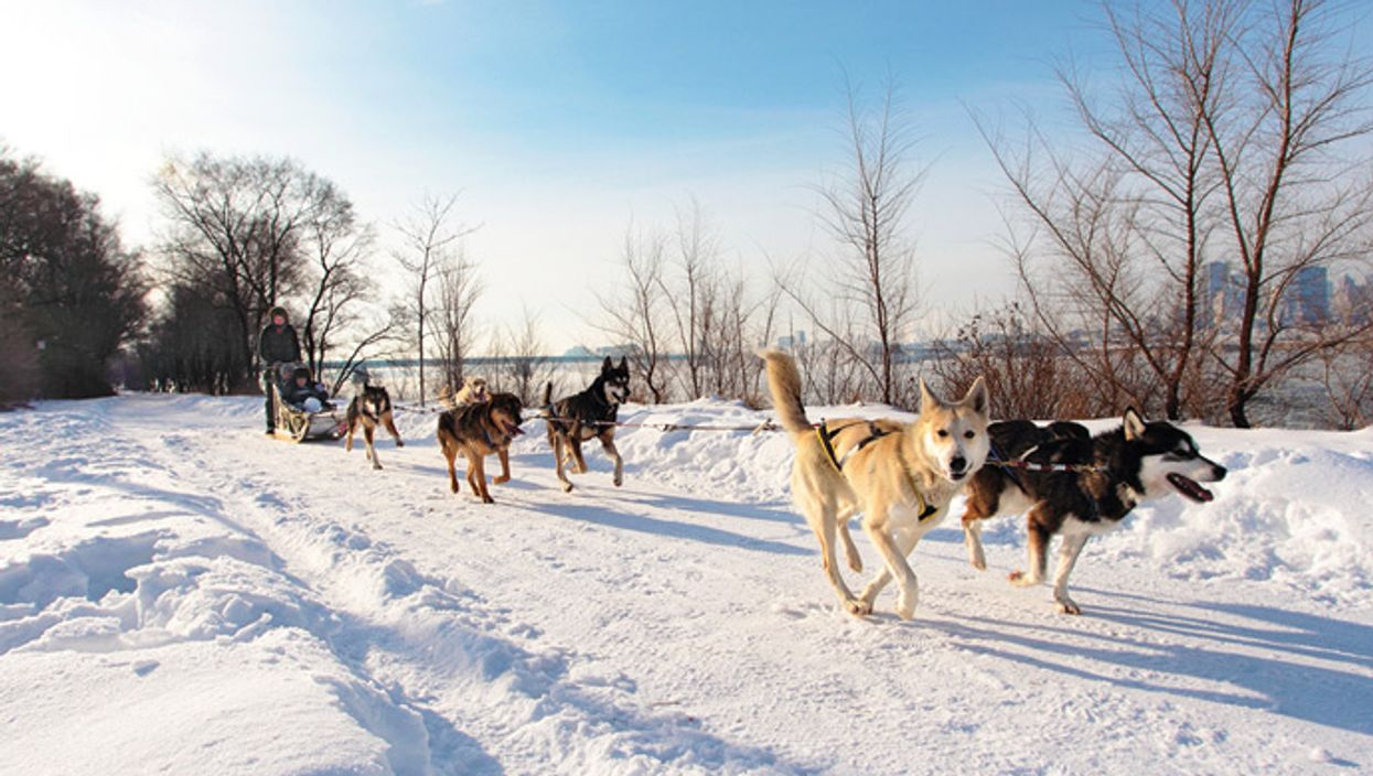 Parc Jean-Drapeau Will Have Weekend Dog Sledding Starting  January 2015