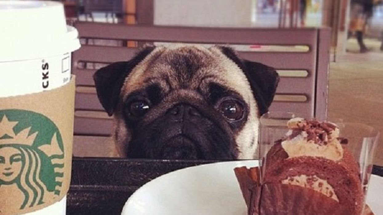 """Montreal's First  """"Dog Café"""" Is Now Open In The Plateau"""