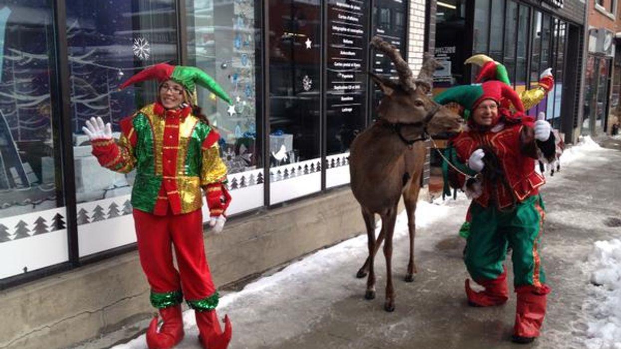 Montreal's Saint-Laurent Street Has Been Invaded By Reindeer