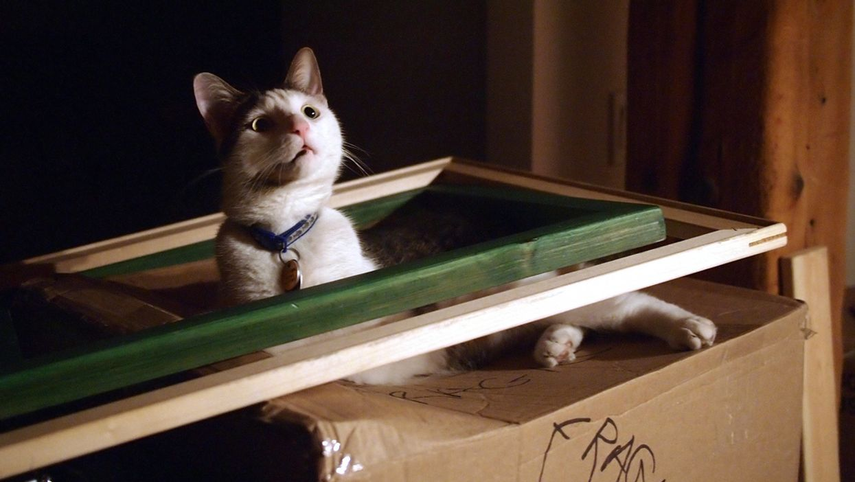 """Montreal Apartment Leases Should Not Have """"No-Pet Clauses"""""""